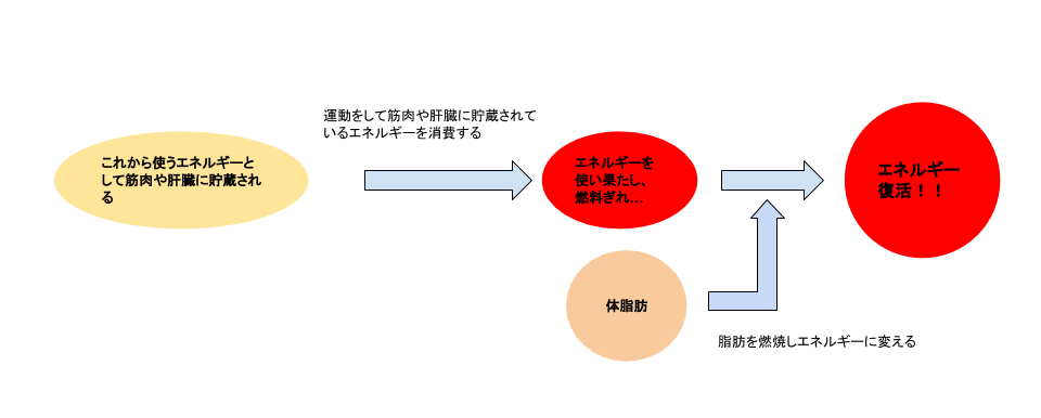 脂肪燃焼図